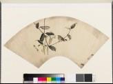 Sparrow on an akebi plant (EA1973.90)