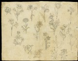 Sheet of flower studies (LI118.69)