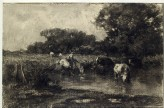 Cows at a watering place