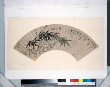 Bamboofront