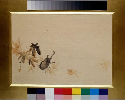 Beetle among autumn leavesfront