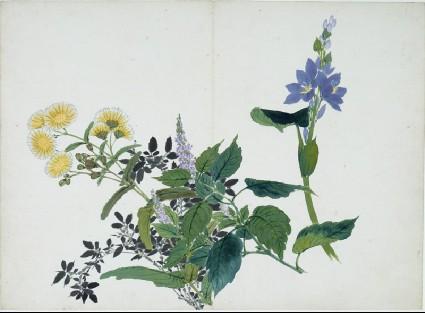 Yellow and purple flowersfront