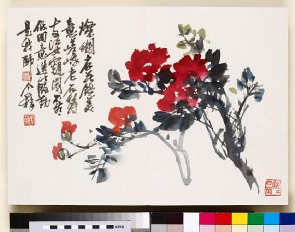 Red flowering branchfront