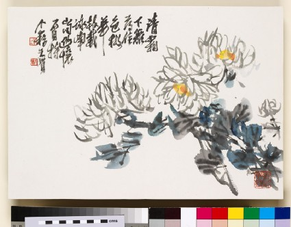 White chrysanthemumfront