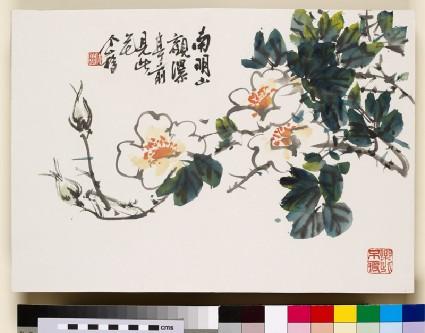 White flowering branchfront