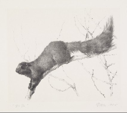Squirrelfront