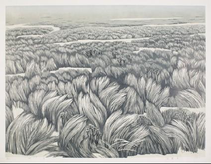 Vigorous Grassfront
