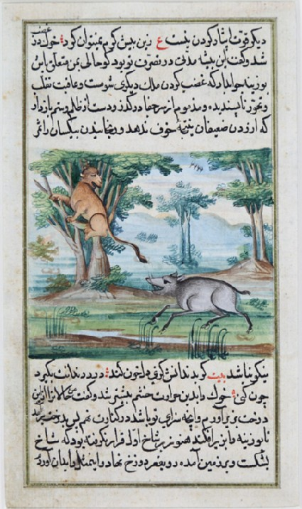 Boar chasing a goatfront