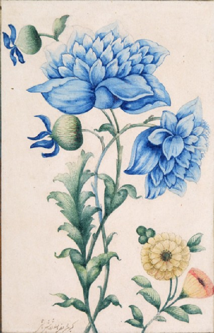 Blue poppiesfront