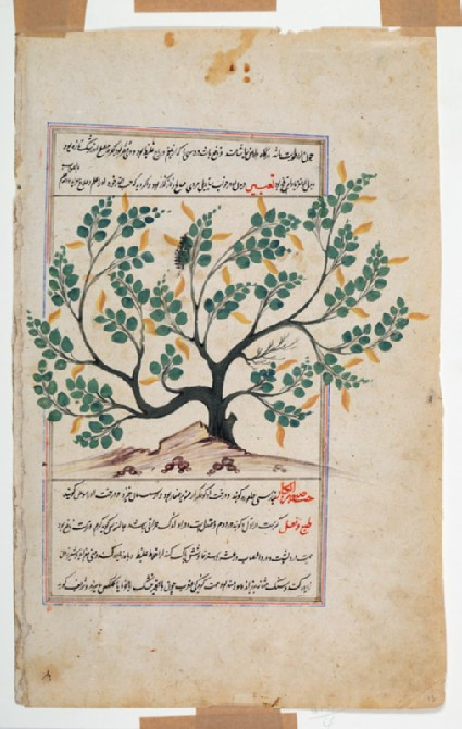 Page from a dispersed manuscript of Qazwini's 'Aja'ib al-Makhluqatfront