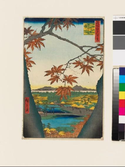 Maple Trees at Mama, Tekona Shrine, and Linked Bridgefront