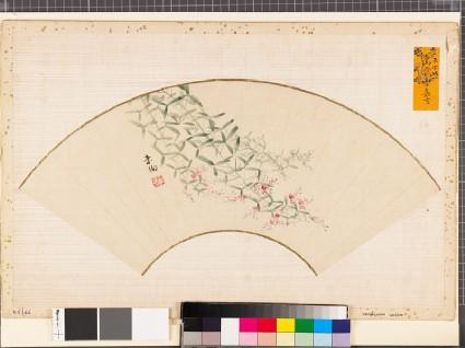 Flowering pink bush clover, or hagifront