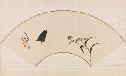 Butterfly and fleabanefront