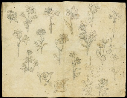 Sheet of flower studiesfront