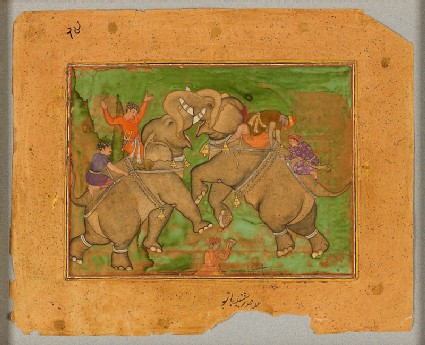 Elephants fightingfront