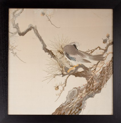 Eurasian Jay (Garrulus glandarius) on a pine branchfront, Cat. No. 11