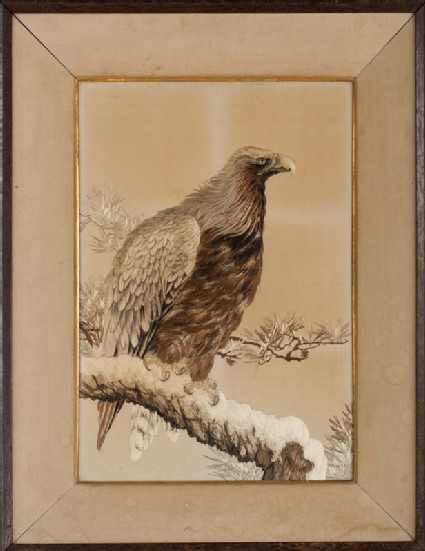 Golden eagle on a snowy pine branchfront, Cat. No. 14